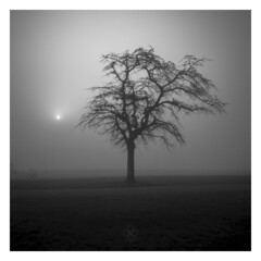 it's a Solar Tree Existence (picturedevon.co.uk) Tags: goodrington park paignton torbay englishriviera devon england uk fineart minimal bw bnw blackandwhite mono tree sun fog mist weather grey outdoors le longexposure nisi ndfilter grass landscape canon wwwpicturedevoncouk photography