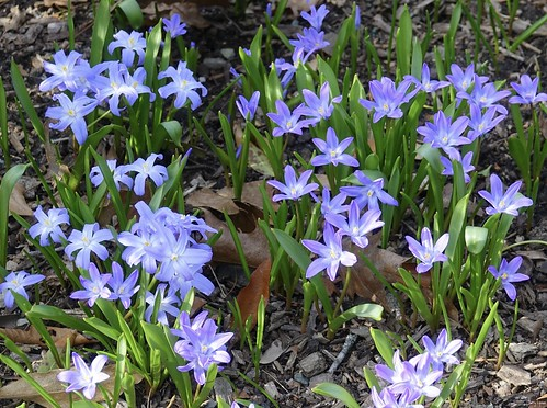 """Spring Fling • <a style=""""font-size:0.8em;"""" href=""""http://www.flickr.com/photos/52364684@N03/34018134796/"""" target=""""_blank"""">View on Flickr</a>"""