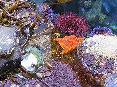 anemone 08 (thedawnsbrain) Tags: sea anemone seaanemone