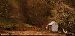 Loch Lomond (williamwalton001) Tags: buildings nationalpark texture timber trees fineart forest rocks tones pentaxcamera trolled netartii trollieexcellence awardtree greenscene