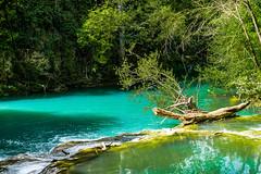 17042017-16042017-_DSC0620.jpg (salvatoretinteri) Tags: italia siena elsa forest tuscany river fiume toscana trasparenze relax water nikon conceptphotos