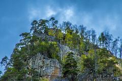 Solitary... (Don Costello) Tags: sky dam forest nature gura apelor nikon d3300 hunedoara retezat plant beauty landscape pics photography