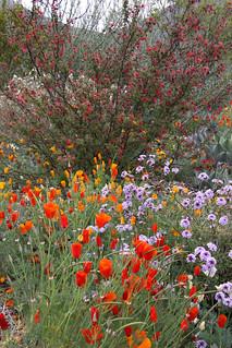 Leaning Pine Arboretum - California Native Landscape