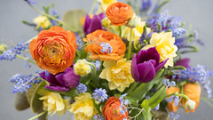 Vibrant Spring large Jug (photoart33) Tags: spring flowers vibrant fresh colourful stilllife tulips muscari forgetmenots ranunculus daffodils purple yellow blue orange
