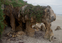 Limestone with solution pipes, and Tetragonia decumbens, Mosman Beach, Fremantle, WA, 02/03/17 (Russell Cumming) Tags: rock limestone solutionpipe plant weed tetragonia tetragoniadecumbens aizoaceae mosmanbeach fremantle perth westernaustralia