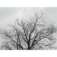 Grey Sky (Katherine_Yar) Tags: park moscow sky grey tree autumn kolomenskoe sadness
