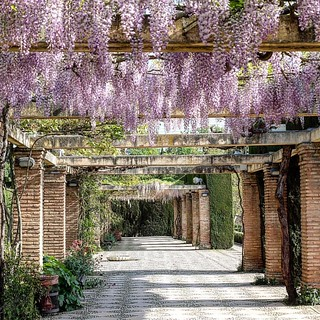 Wisteria lovely in Alhambra Gardens! #granada #spain