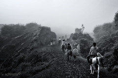 Journey to Bromo crater (Schristia) Tags: bromo bromotenggersemerunationalpark horseriding fog blackandwhite bnw nature volcano crater travel indonesia