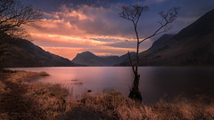 When The Sun Goes Down (Adam West Photography) Tags: adamwest buttermere cumbria district drama england lake lone longexposure mood mountains tree trees uk water waters grasses reflection shimmer wbpa