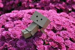 Danbo Enjoys Longwood Gardens (Dreaming Magpie) Tags: life trip flowers vacation japan gardens garden relax toy japanese robot purple anniversary mums pa mum cardboard enjoy figure everything longwood yotsubato yotsuba danbo danboard