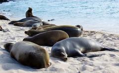 Galapagos - San Cristobal-12
