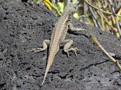 Galapagos - San Cristobal-67