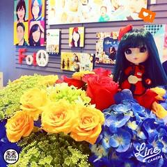 ☺️ ขอบคุณย๊งยี๊ ดีใจม้าากกเลย ดอกไม้สวยม้าากจ้า...คำอวยพรดีงามทั้งหมดขอให้เกิดขึ้นกับเราทั้งสองคน...ดีใจมากจิงๆ ขอบคุณที่เปนเพื่อนกัน #flower #Pullip #littlepullip #littledolls #dollphotography #fotoplease #cute