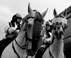 Garda horses (Dani De Loren) Tags: street city ireland horses dublin white black blanco caballos police event irlanda policias phisborou
