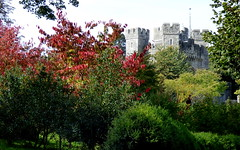 Arundel Castle, West Sussex (hugit4249) Tags: wood flowers autumn trees west tree tower castle fountain pool leaves gardens daisies sussex arch colours shadows view cathedral path pumpkins scarecrow lawn scene spray palm panasonic antlers spire needle squash sunflower keep apples fountains bushes shrubs arundel gravel dmc peahen refelctions spouting lumic arundelcastle arbour sunshin stumpery hugit4249 fz72