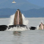 Wild whales