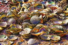 Taste the rainbow (guy with cameras) Tags: food baby green beach grass dead bay rainbow weeds pretty blind little florida small young shell down hide shore swimmer scallop crush washedup stud wast lakepond topazlabs deanbeyett