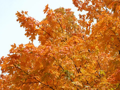 """Orange Fiery Branches 2 • <a style=""""font-size:0.8em;"""" href=""""http://www.flickr.com/photos/34843984@N07/15236856859/"""" target=""""_blank"""">View on Flickr</a>"""