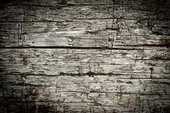 FallenTree (C.Chess) Tags: tree nature bark