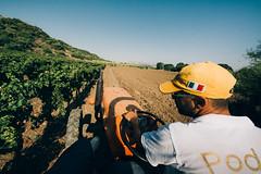 _MG_9431 (qbetto.com) Tags: vineyard workers wine harvest grapes sicily uva sicilia siracusa vino vendemmia agricoltura vigneto pupillo operai moscato agricolture raccolto solacium