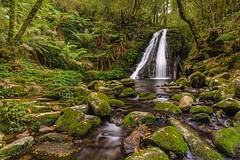 Five Day Creek Cascades (merbert2012) Tags: travel nature landscape reisen nikon rainforest walks newengland australia cascades nsw wandern creeks planetearth gondwana
