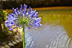 Foto Tirada no Parque Floresta Encantada em Campos do Jordo - SP (Richard Assis / registrodeviagem.blogspot.com.br) Tags: flower flor sp florzinha camposdojordo parqueflorestaencantada