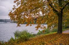 October mode (Storkholm Photography) Tags: park city autumn trees orange lake green fall nature water landscape 50mm nikon october europe sweden stockholm scandinavia leafs 50mmf14 kungsholmen d610