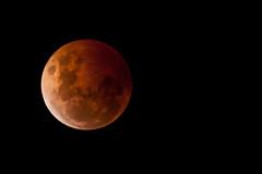 20141008_2607_1D3-600 Blood Moon (lunar eclipse) (johnstewartnz) Tags: moon canon eos eclipse lunar 600mm 600mmf4 1dmarkiii 1d3 1dmark3 canon600mmf4 unlimitedphotos