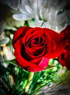 Red  Rose In Arrangement