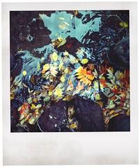 秋山の壁紙プレビュー