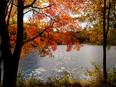 Autumn in Rhode Island (allfalldown) Tags: autumn trees sky lake color fall nature water leaves clouds digital canon river island woods colorful path property foliage foster spencer rhode