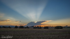 Crocodile breton (David-Martinelli-Photos.net) Tags: sunset clouds bretagne olympus breizh nuages campagne champ coucherdesoleil omd bzh em1 em5 rayonsdesoleil