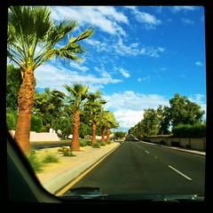 (BurstsofSingleMindedness) Tags: hot desert palmsprings palmtrees climate datepalm inlandempire