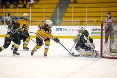 A77V8019 (Don Voaklander) Tags: hockey edmonton regina pandas cougars universityofalberta voaklander