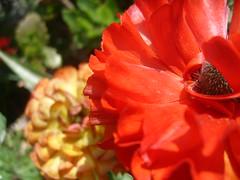 Radiantemente (0_Detalles_0) Tags: color luz flor texturas suaves apasionado radiante