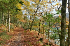 Autumn walk along Odet river (francois.pouzet999) Tags: autumn france bretagne forests hdr finistere 2013 nikond600 plomelin odetriver