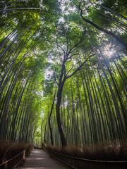 Arashiyama Bamboo Grove (adairfarrar) Tags: japan kyoto olympus bamboo fisheye arashiyama 9mm epl5