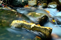 There's gold in that river . . . (Dr. Farnsworth) Tags: fall water leaves rock mi gold flowing panning solid fernridge september2014