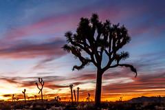 Land that Time Forgot (davecurry8) Tags: california sunset nationalpark desert joshuatree mojave