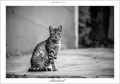 Abandonado (Jos Eduardo Nucci) Tags: blackandwhite cats nature animals rio brasil riodejaneiro nikon natureza gato felinos animais pretoebranco 28300mm d800 brasilemimagens