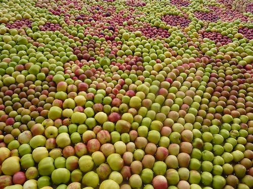 Apples make a bumpy texture