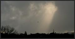 Crepuscular Rays shine on West Auckland (Zelda Wynn) Tags: trees sunset newzealand weather spring cloudy auckland artgalleryofnsw equivalent crepuscularrays newlynn artgalleryofnewsouthwales westauckland inspiredbyalfredstieglitz weatherwatch zeldawynnphotography