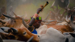 Ethiopa-4122 (EB_Creation) Tags: ethiopia nikon nikkor woman ethnic hamar travel 1802000 mm f3556 1802000mmf3556 nikon1802000mmf3556 nikkor1802000mmf3556 world bull jumping bulljumping ceremony athiopia africa outsdide outdoor amazing fantastic horn holidays vacation