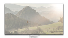 _DSC1680-2 (Guillaume G. Photographie) Tags: nature paysage nikon d500 70200 f28 aigle eagle bird montagne sun flare lighting morning photographer wild animal munier style