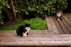 Cats in back alley of Chiba city 2017/04 No.1(One scene of commuting 2017/04 No.2). (HIDE@Verdad) Tags: pentaxistds flektogon35mmf28 pentax istds flektogon