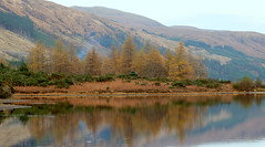 Bank of the Loch Doughaill (John (thank you >1 million views)) Tags: 500milesnorthcoastroadtrip landscapephotography westerross travelphotography trees reflections lochdughaill scotland 7dwf loch