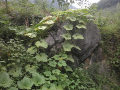 Guizhou China 2016 惠水5 (黔中秘境) Tags: china guizhou asia mountains 中国 贵州 亚洲 山 大自然