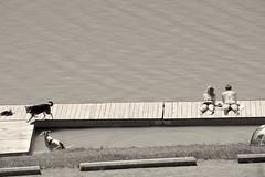 Couple with dogs (Sarah Hina) Tags: couple sunbathing dogs dock dowlake blackandwhite