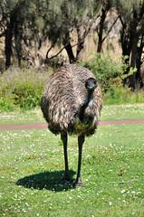 DSC_7073 (Tim Beach) Tags: great ocean road melbourne victoria australia port fairy twelve 12 apostles princetown apollo bay beach sea water bird animal
