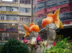 Fish statues at gold fish market in Hong Kong (phuong.sg@gmail.com) Tags: animal aquarium aquatic asia asian attractive bag buyer cheap china chinese choice city color culture customer east ecology environment fair fresh freshwater gold goldfish guppy hobby individual loneliness look market orange passion people pet plastic sale sell serious shop stall store street swim tank trapped tropical